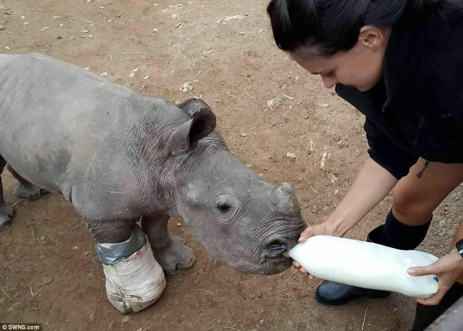 Arthur Rhino