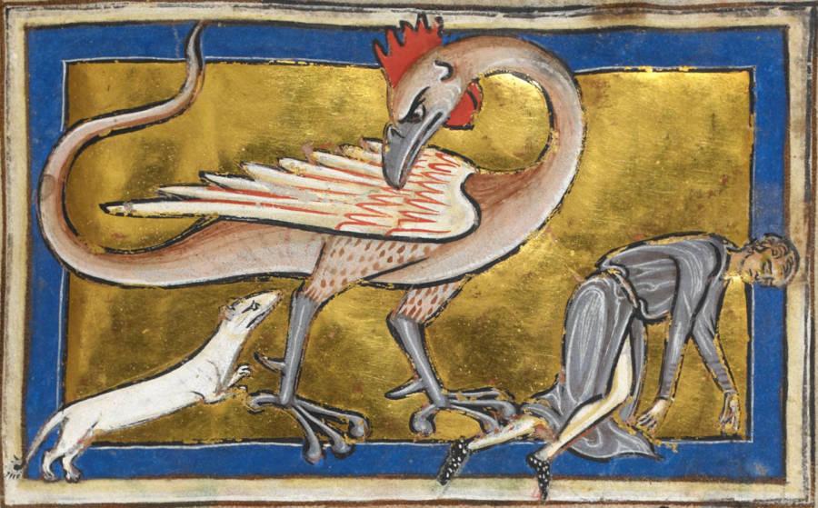 Basilisk Mythological Creatures