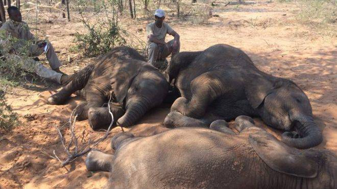 Dead Elephants Botswana