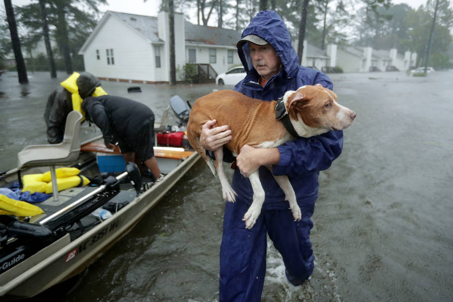 Florence Dog Rescue
