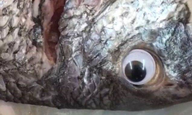Googly-Eyed Fish