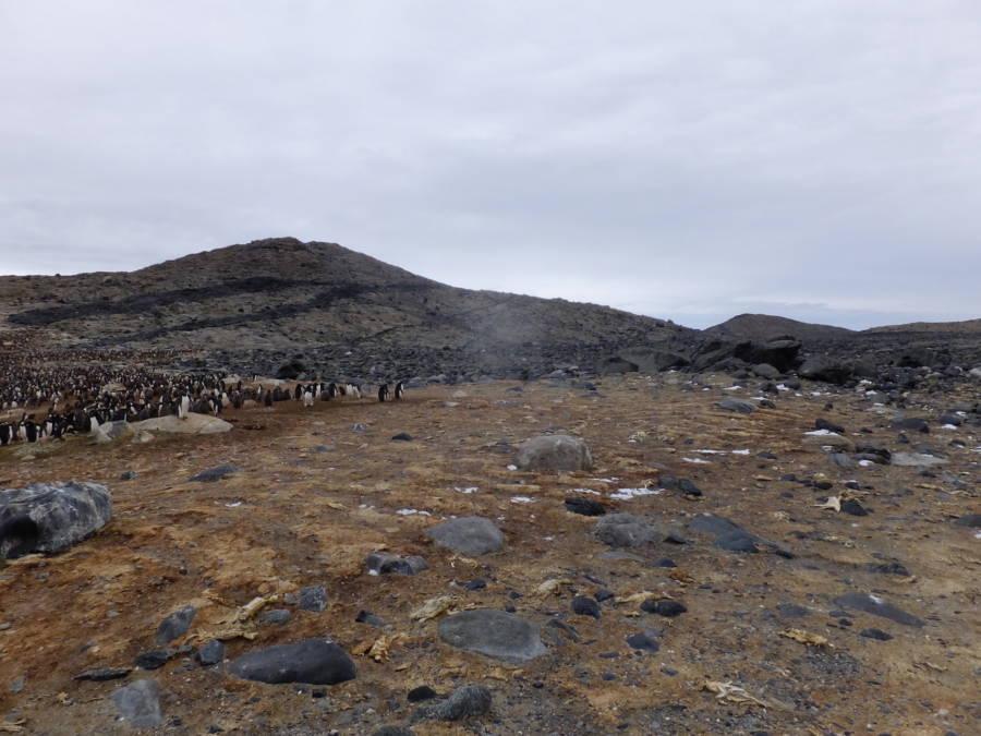 Mass Penguin Grave