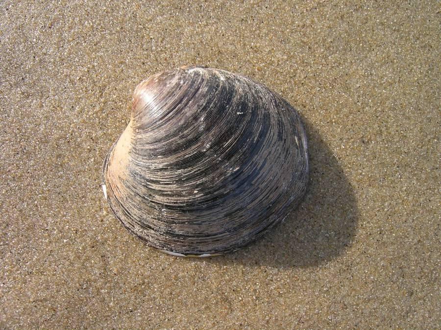 Ocean Quahog Beach