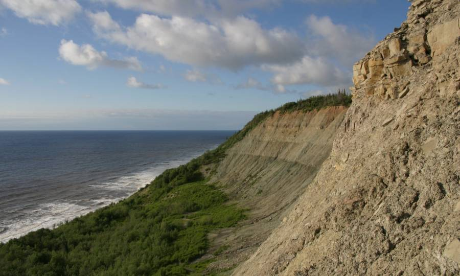 Russian Cliffs Dickinsonia