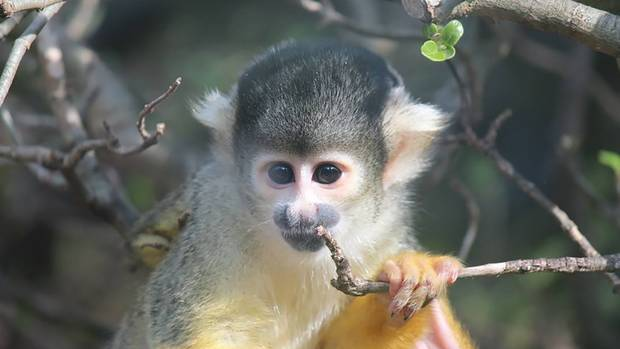 Squirrel Monkey Zoo