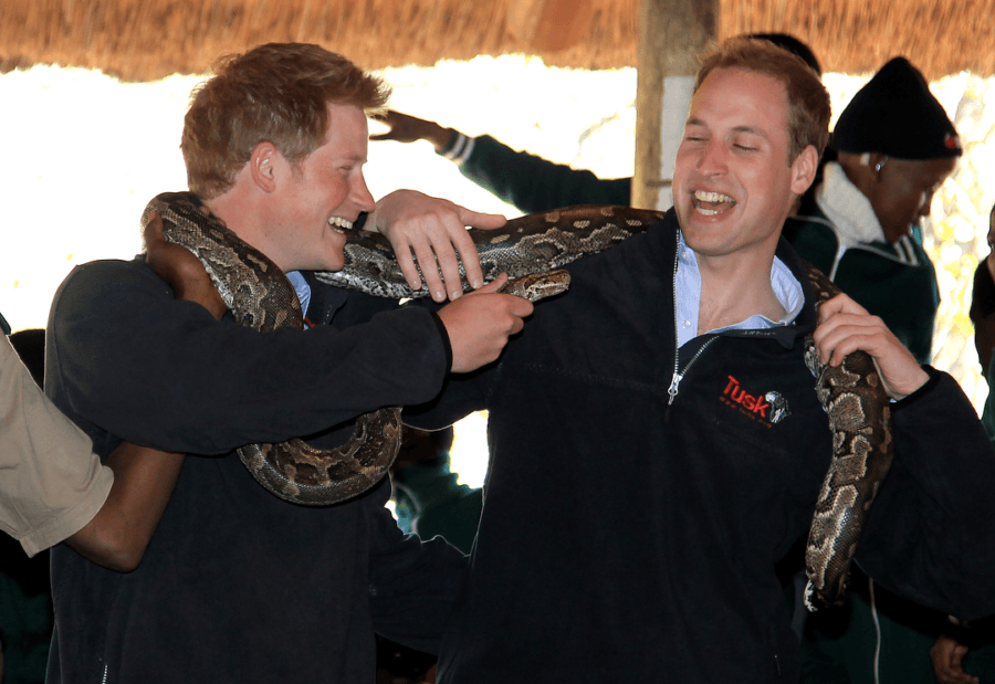 Royal Family Photos Of William And Harry And Snake