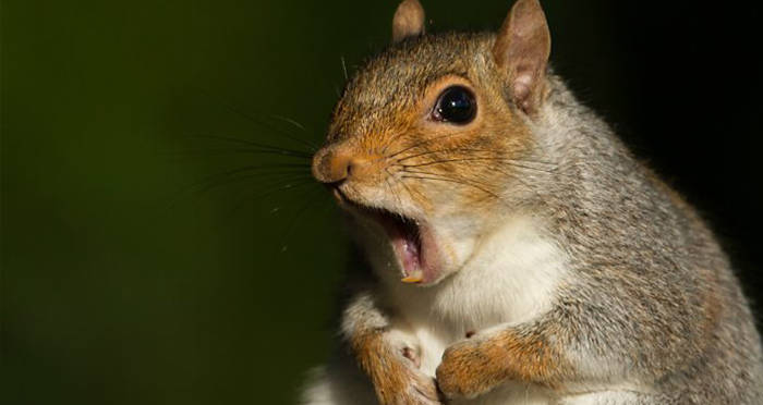New York Man Dies Of Mad Cow-Like Disease He Got From Eating Squirrel Brains