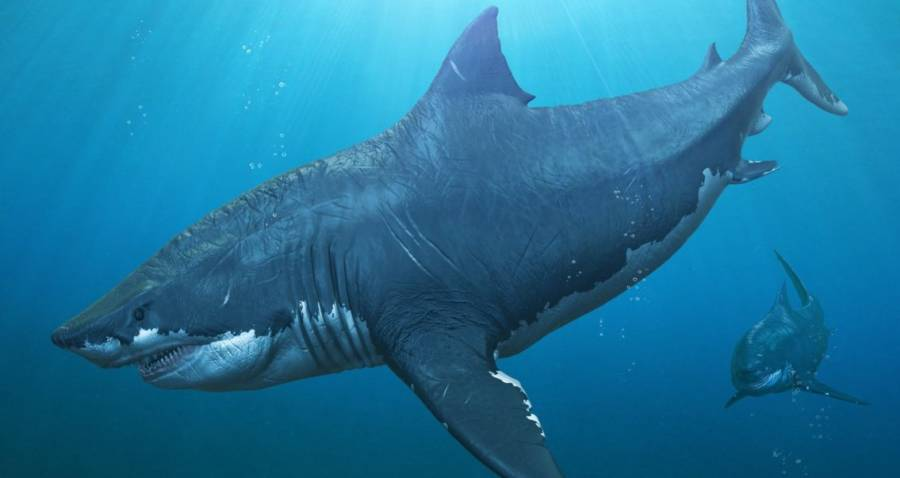 Megalodon: The Prehistoric Shark Of Your Nightmares