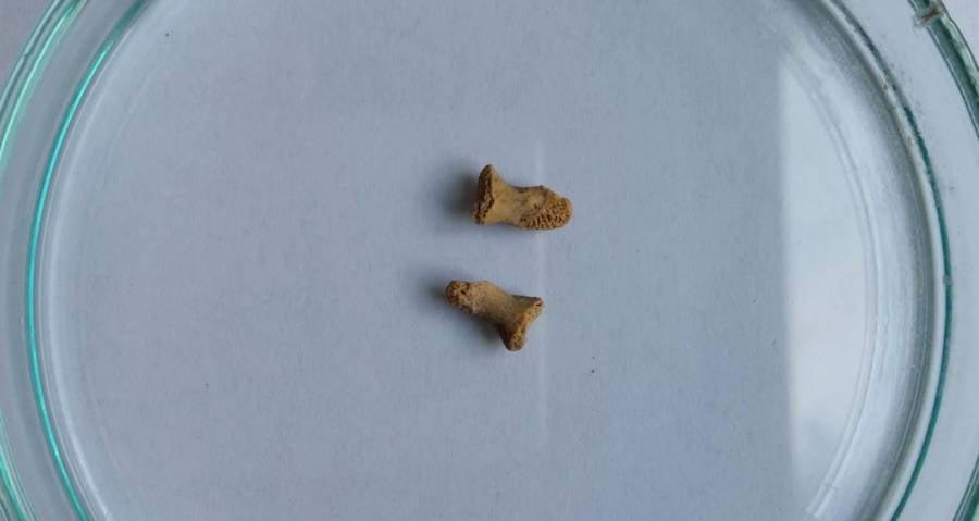 Neanderthal Child Finger Bones