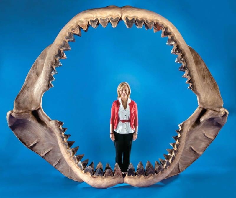Woman Megalodon Jaws