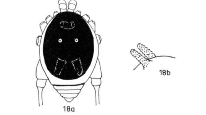 Bunny Arachnid Sketch