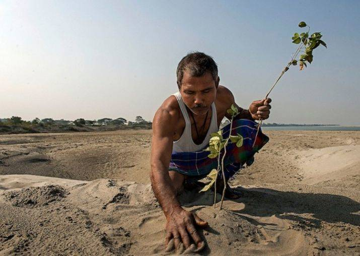 Jadav Payeng Planting