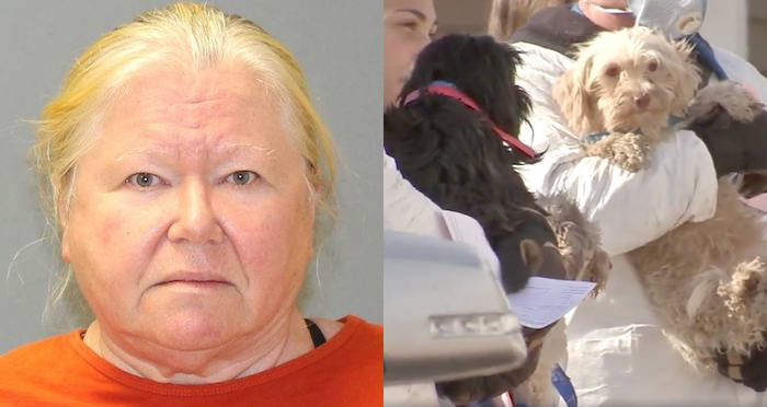 44 Dead Dogs Found In Woman's Freezer — And 161 Others Were Living In Their Own Filth