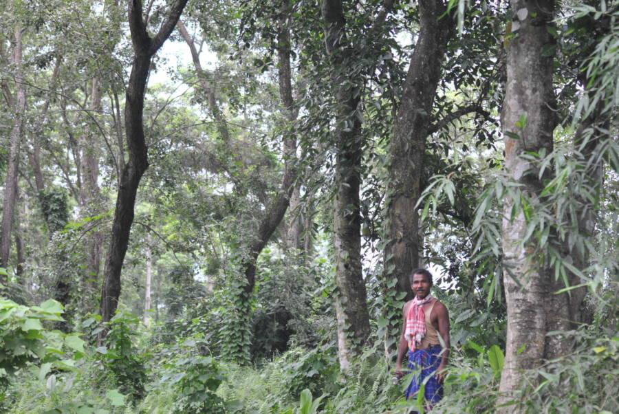 Jadav Payeng's Forest