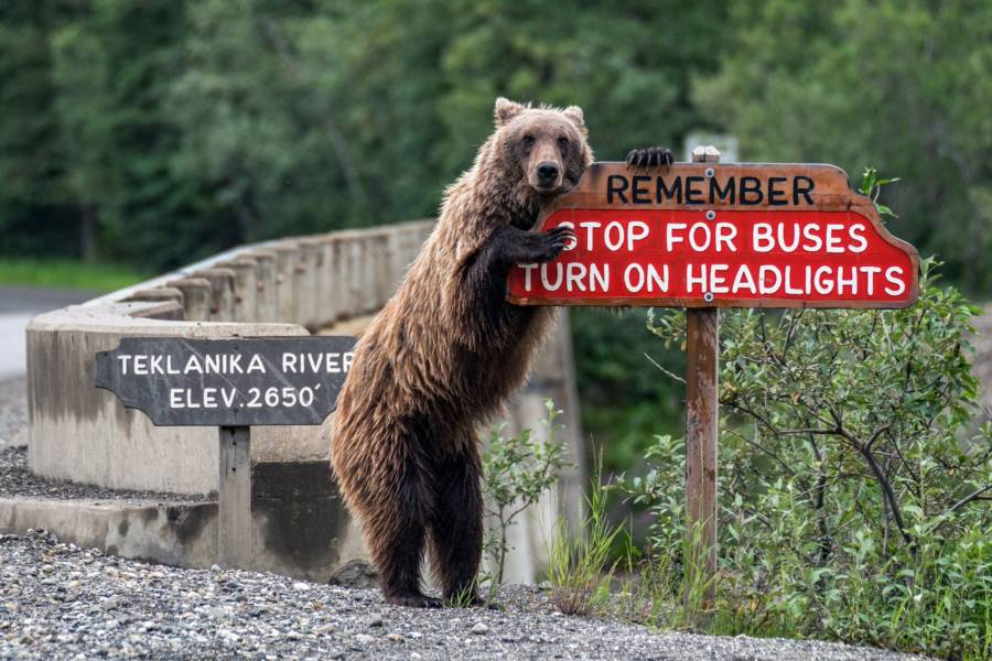 Bear Leaning On Sign