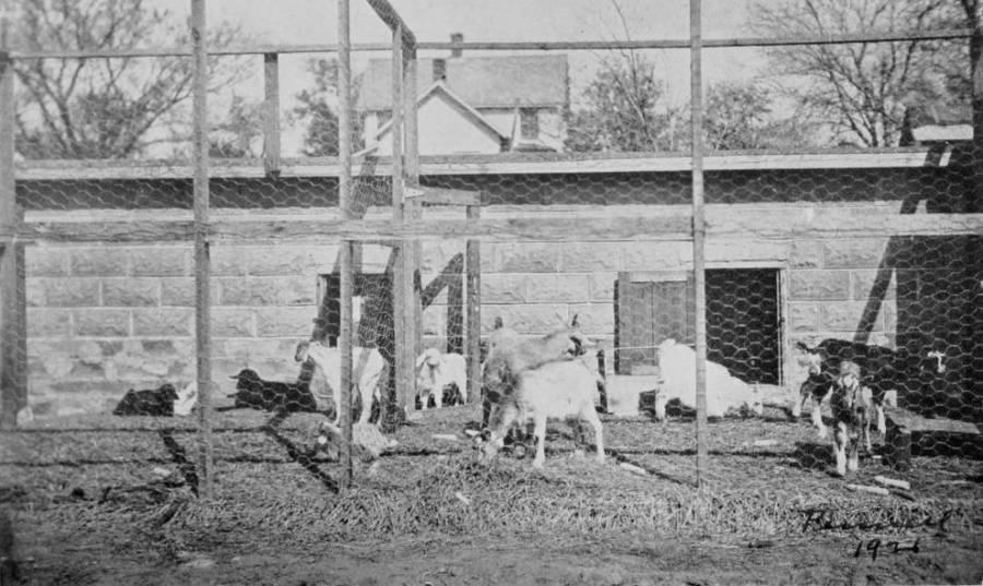 John Brinkley's Goat Farm