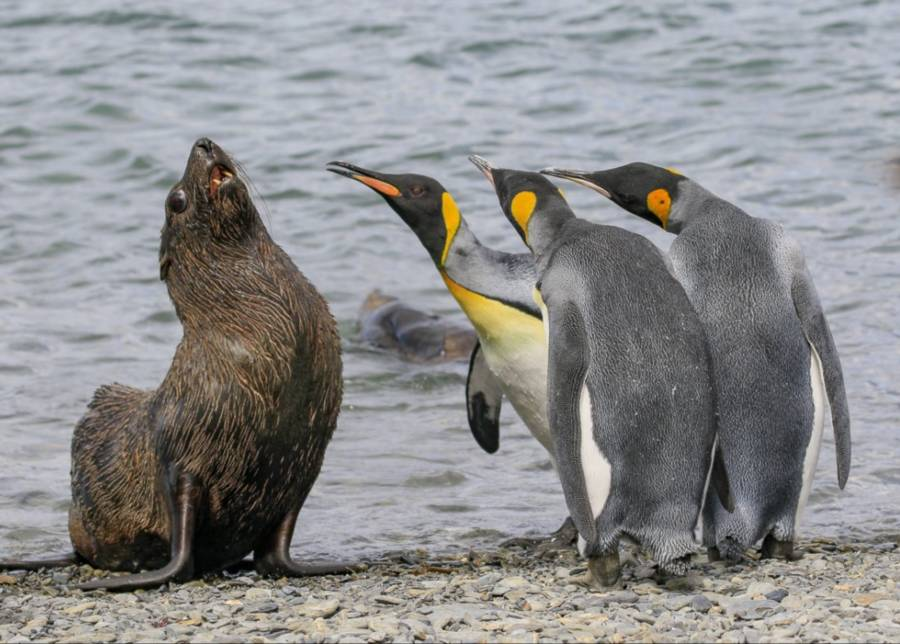 Funny Animal Pictures Seal And Penguin