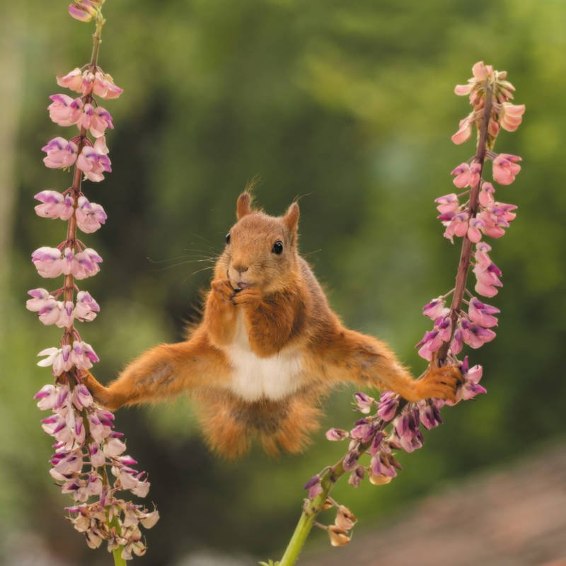 Squirrel Does The Splits