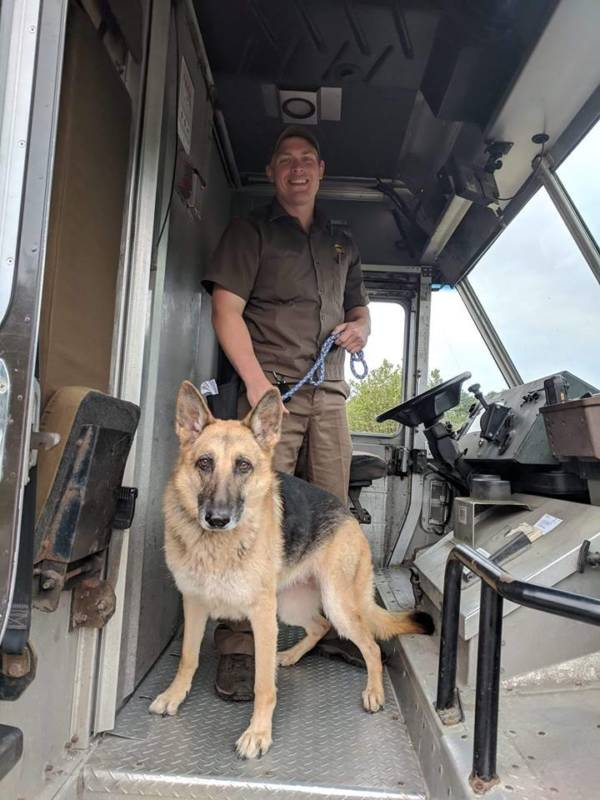 UPS Delivery Man And German Shepherd
