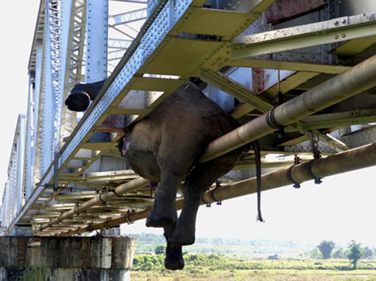 Dead Elephant Railroad