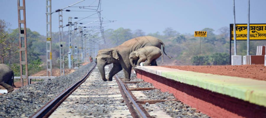 Elephant Railway Crossing