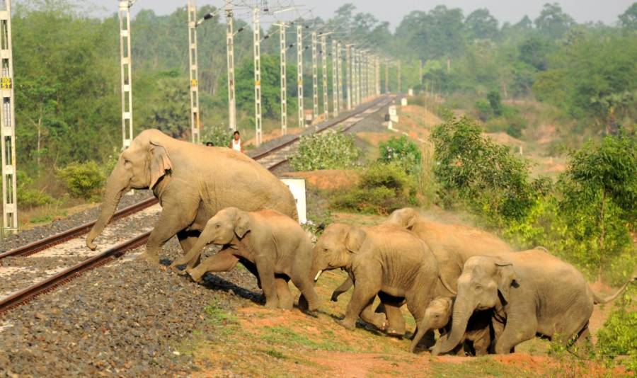 Elephants Crossing Tracks