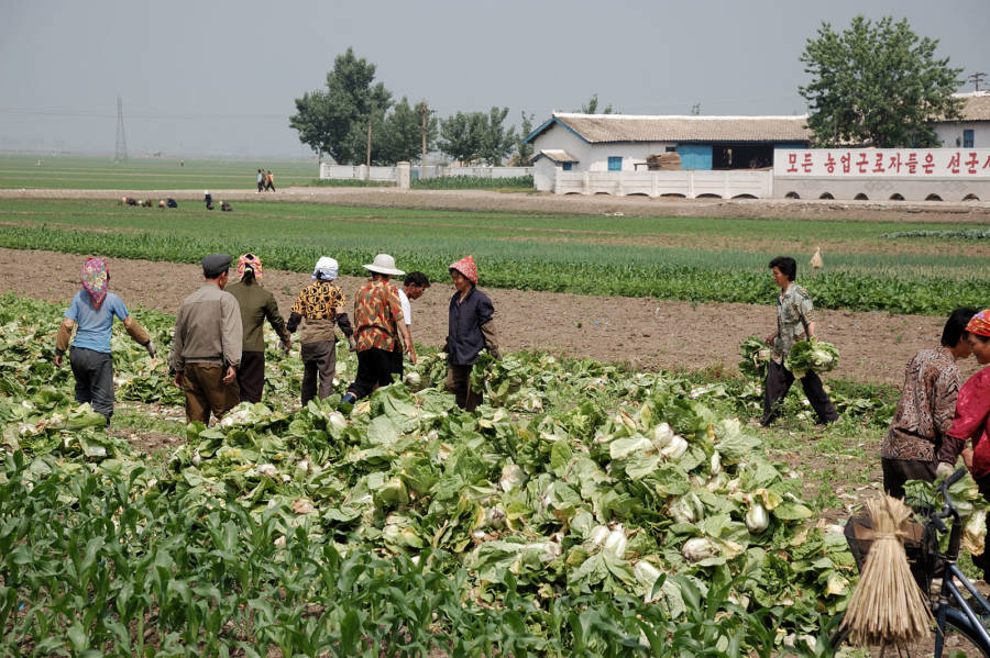 North Koreas Migok Farm