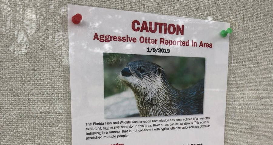 Otter Warning Sign