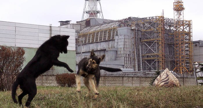 How The Animals Of Chernobyl Thrive In The Radioactive Red