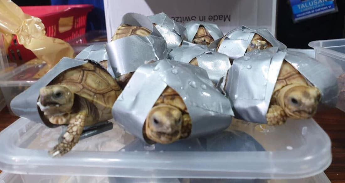 Duct Taped Turtles Featured