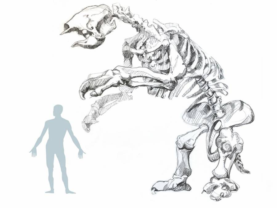 Human Giant Sloth Comparison 2
