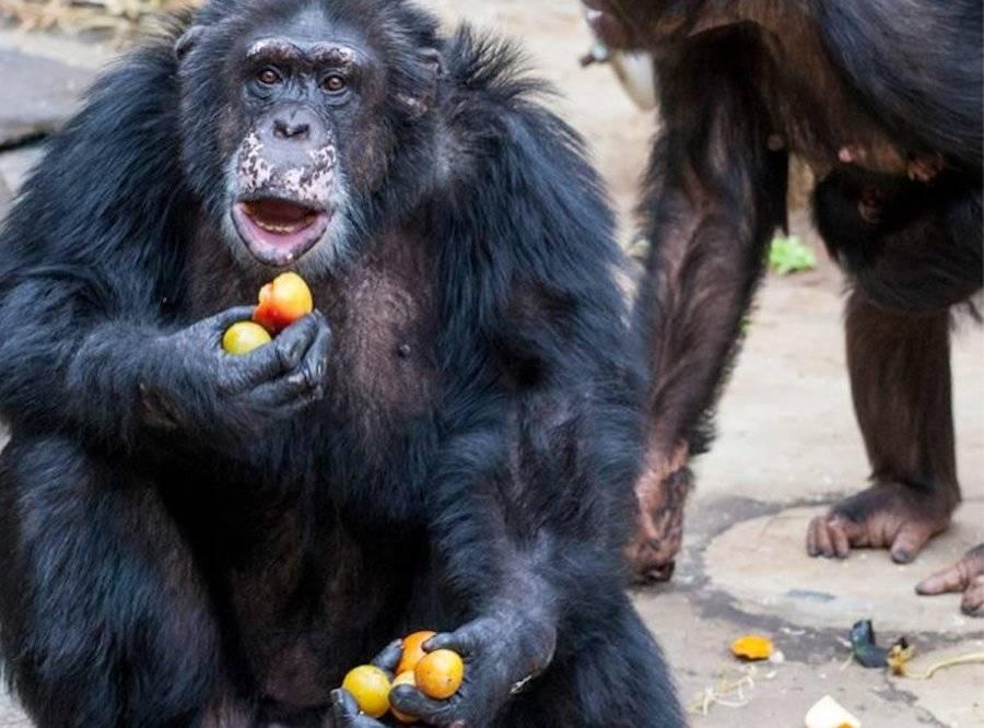 Julius Eating Oranges