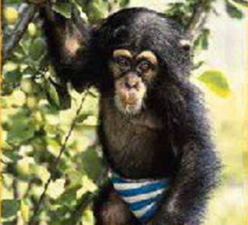 Julius The Chimp As A Baby