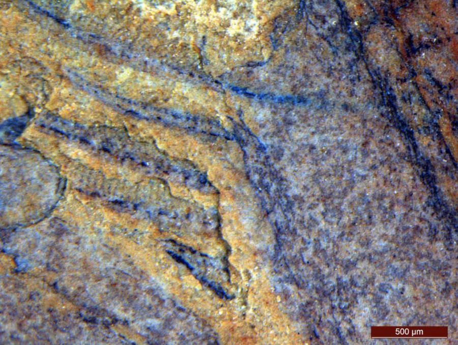 Magnified Image Daihua Fossil