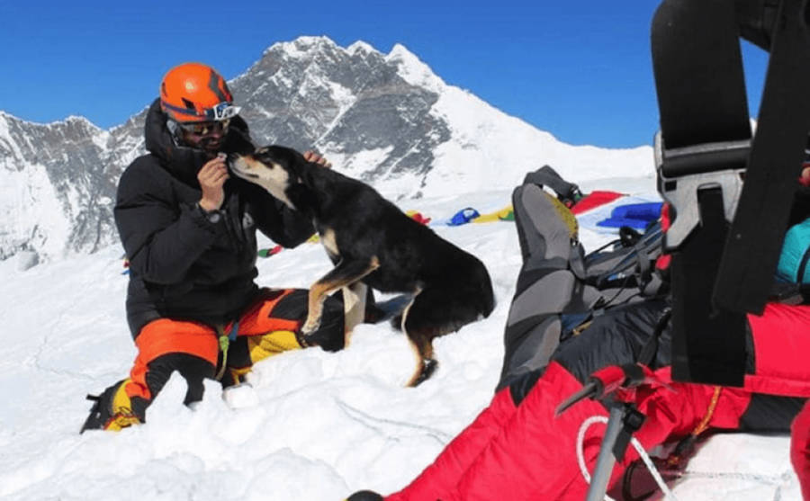 Mera Himalaya Dog