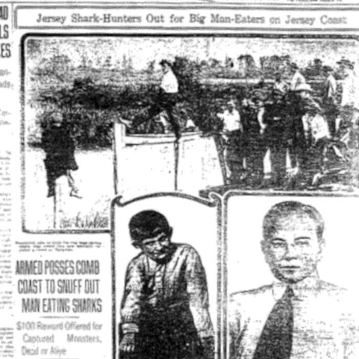 1916 Article On Shark Attacks