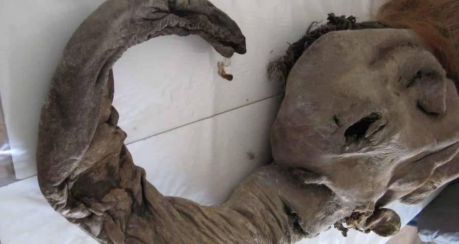 Yuka The Mammoth Corpse