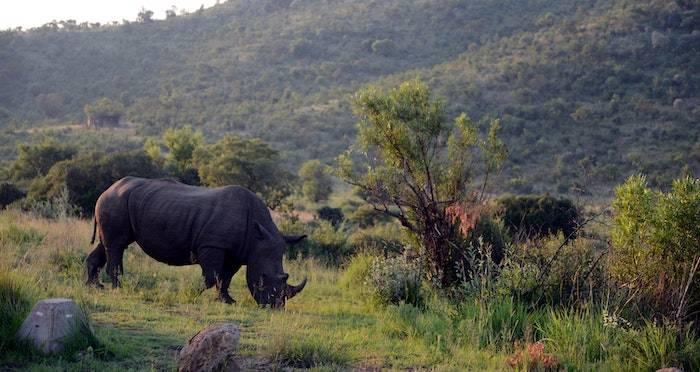 Guide To Rhinos - owncloud.argonics.com