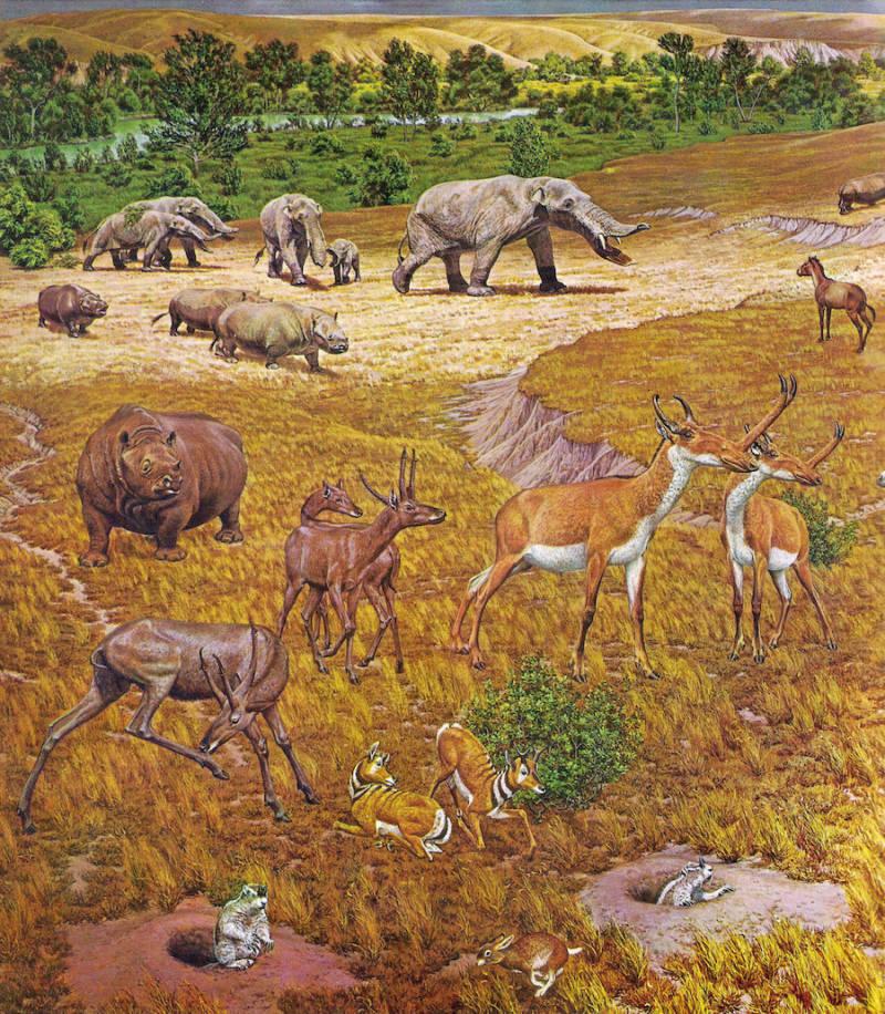 Ancient Texas Illustration