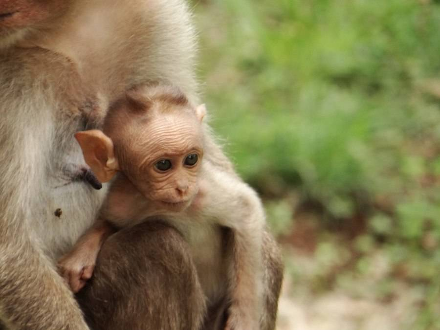 Baby Primate