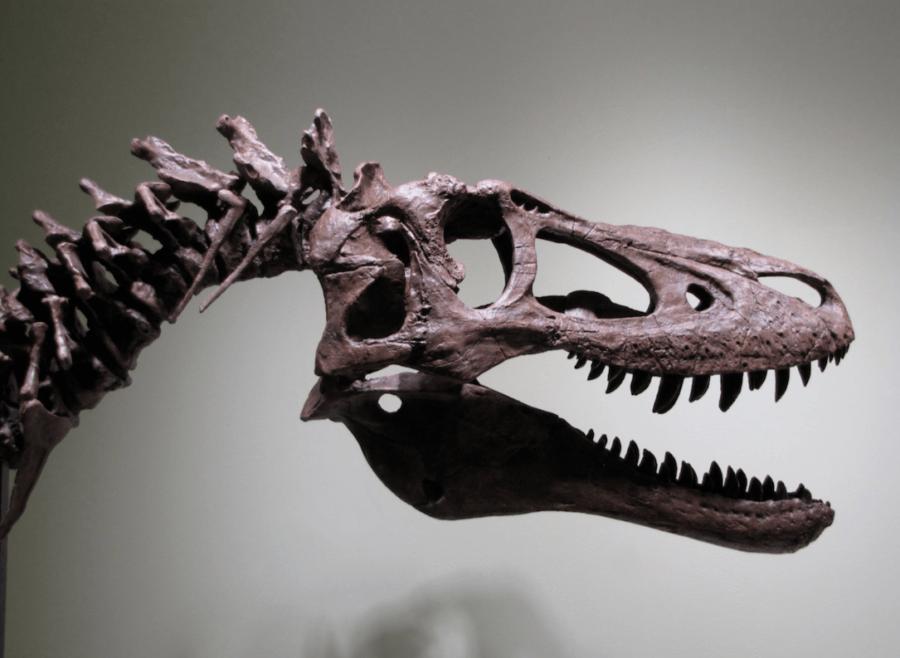 Baby Trex Fossils Ebay