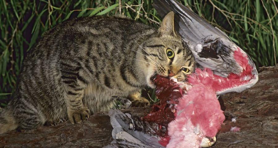 cat-eating-bird.jpg