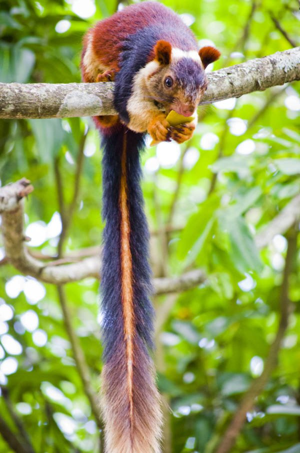 Colorful Squirrel Tail
