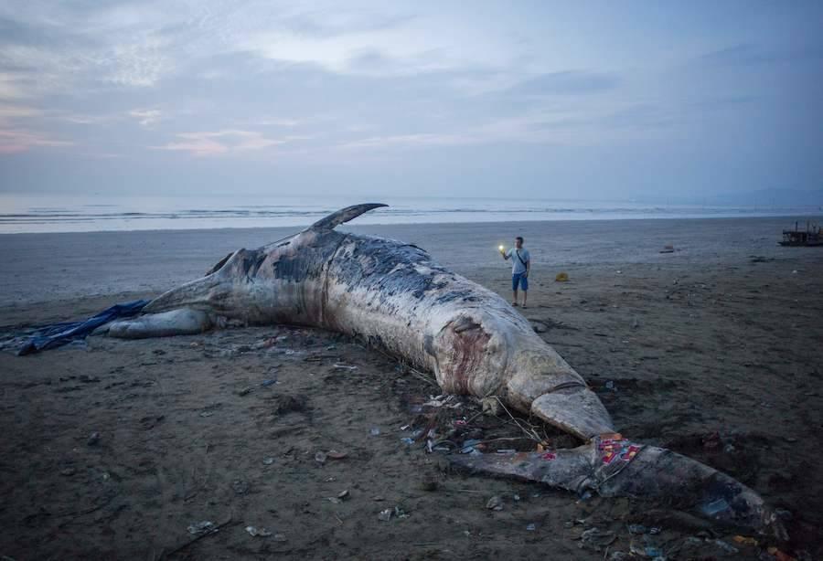 Dead Whale In Vietnam