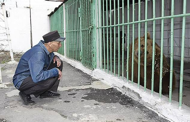 Meet Ekaterina: The Brown Bear Serving A Life Sentence In A
