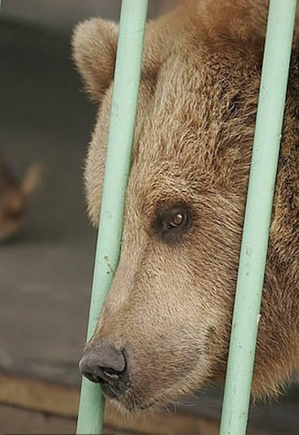 Ekaterina Imprisoned