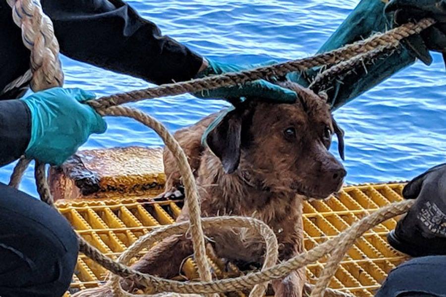 Oil Rig Dog