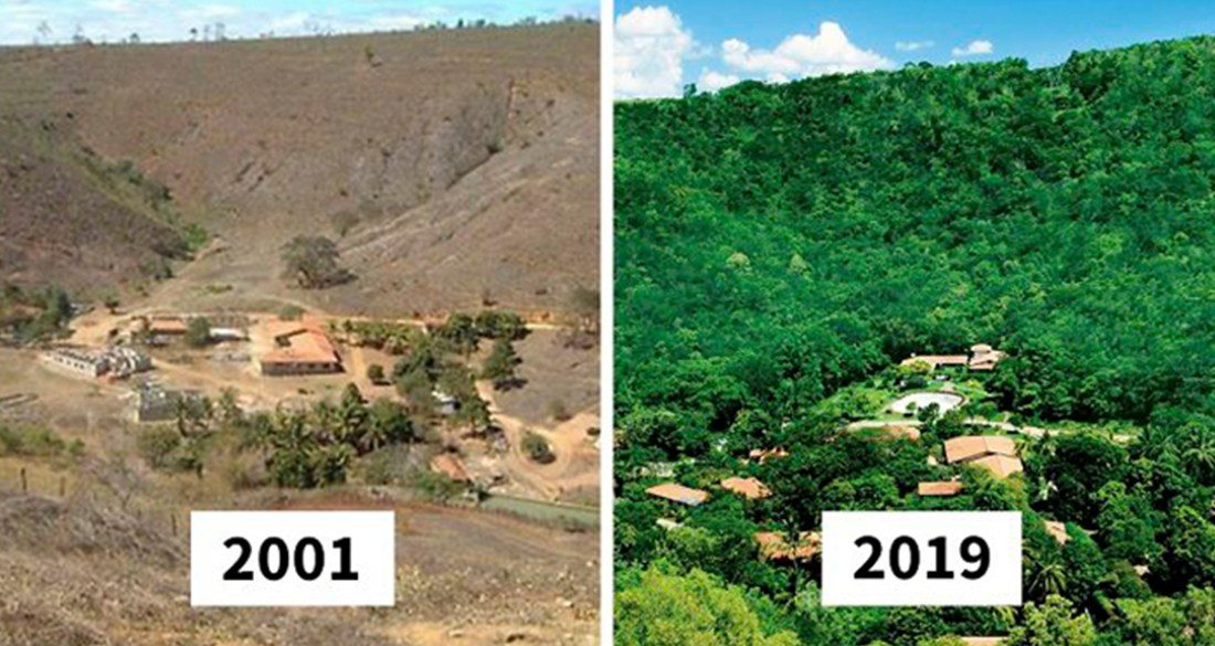 tress-planted-in-brazil-before-and-after-featured.jpg