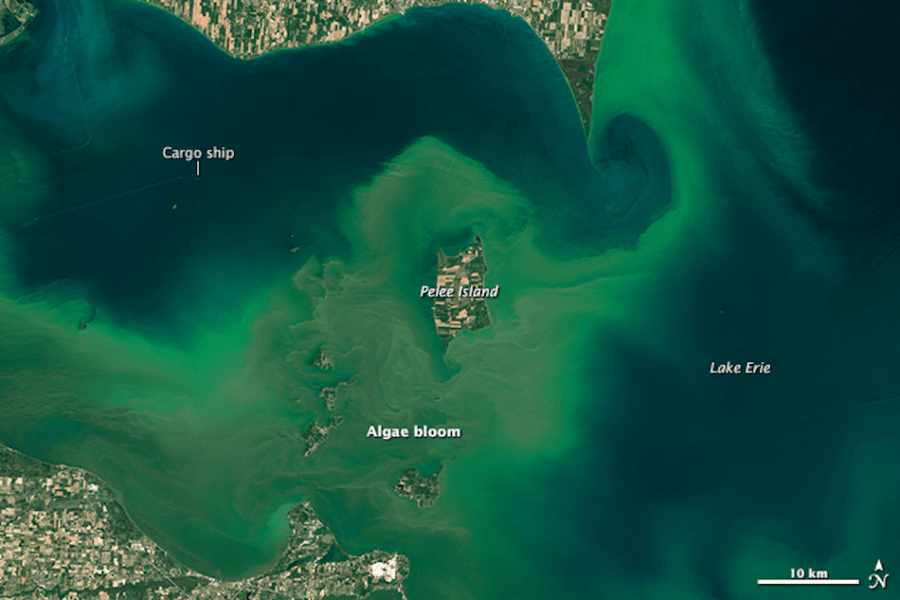 Algae Bloom Erie