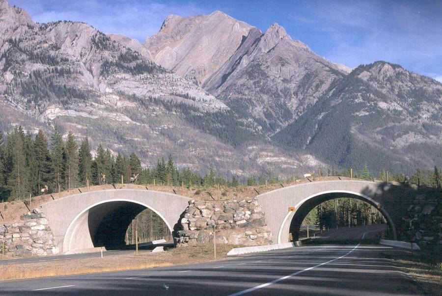Tree-Covered Animal Bridges Over Highway